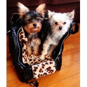 Luxury Pet Bags