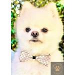 Designer Pet Bowtie