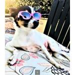 Tiny Dog Butterfly Sunglasses