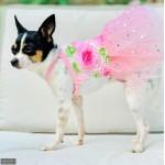 Rosette Sparkle Tutu Dress