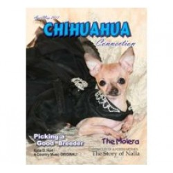 Chihuahua Connection